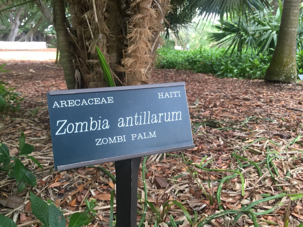 Zombies are EVERYWHERE !