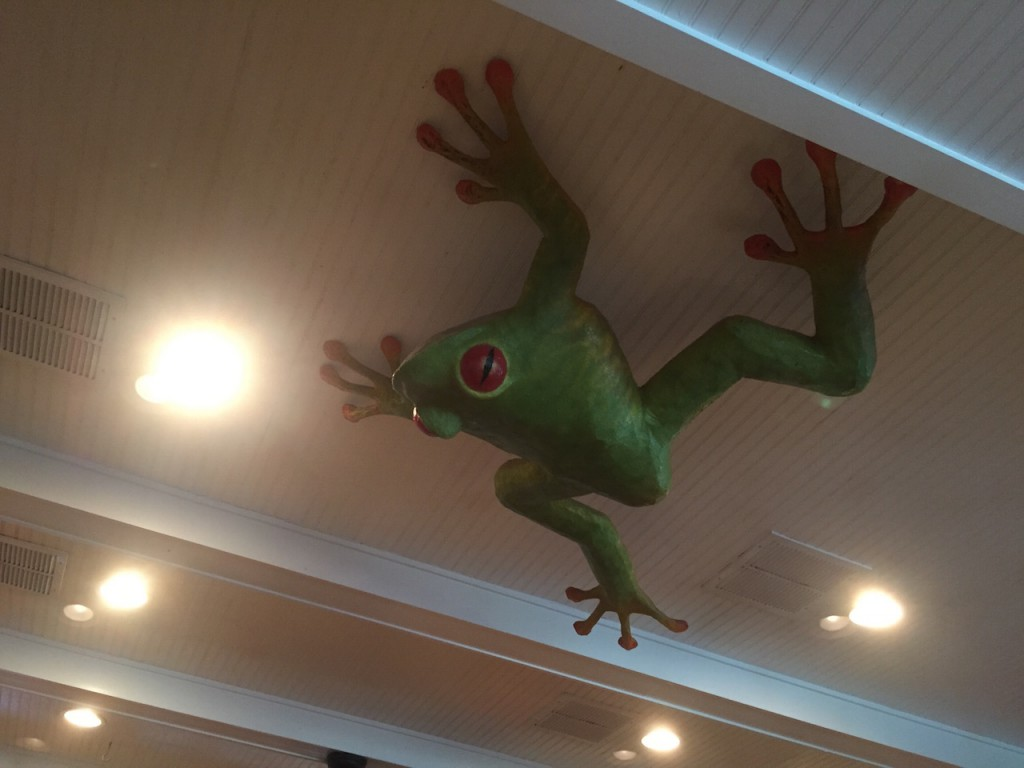 Yes, it's a frog.... on the ceiling....