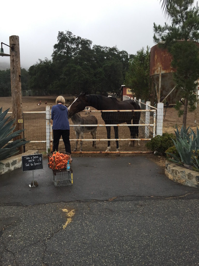 Cyndie couldn't resist feeding the horses - who could blame her.